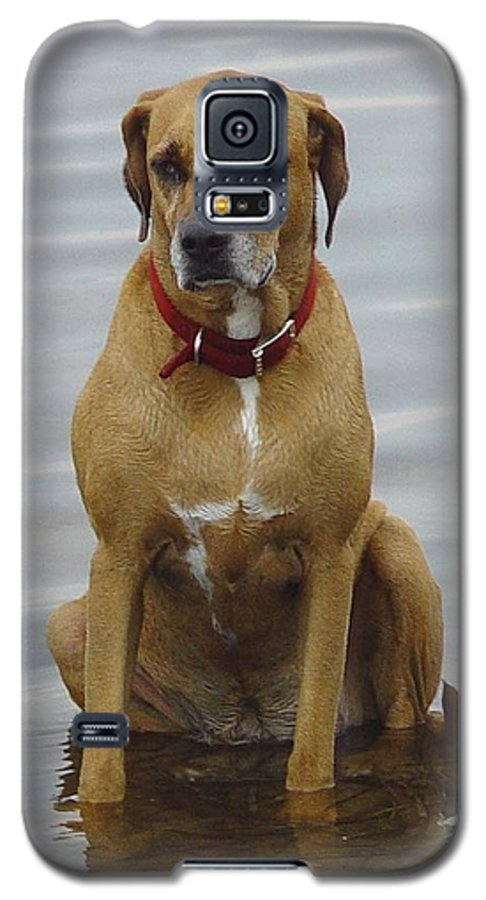 Dog Galaxy S5 Case featuring the photograph Where's The Pillow by Debbie May