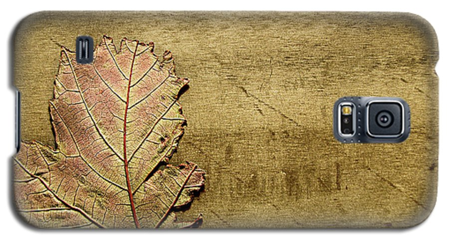 Autumn Galaxy S5 Case featuring the photograph ...while You Fall Apart by Dana DiPasquale