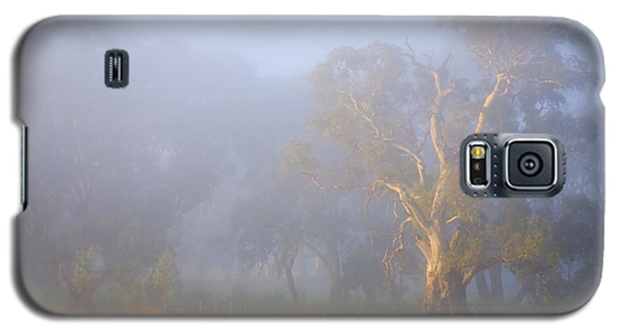 Tree Galaxy S5 Case featuring the photograph White Gum Morning by Mike Dawson