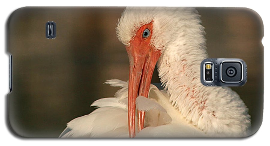 Ibis Galaxy S5 Case featuring the photograph White Ibis Placid Preening by Max Allen