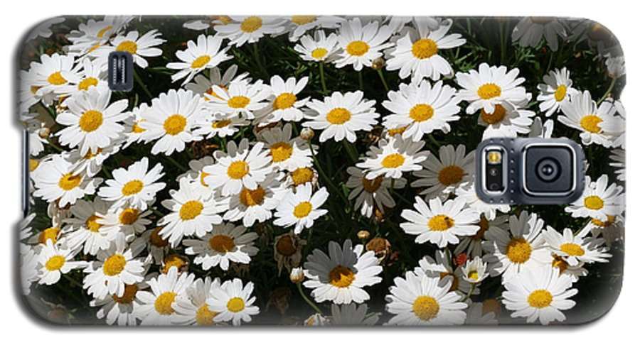 White Galaxy S5 Case featuring the photograph White Summer Daisies by Christine Till