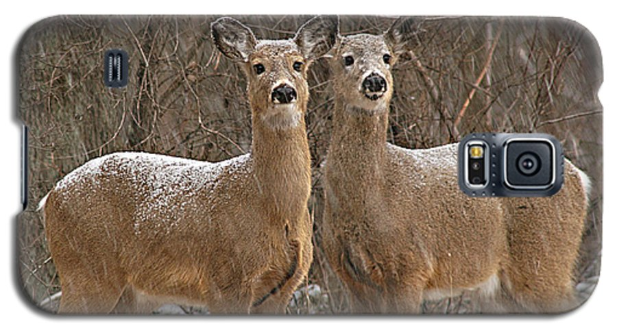 Deer Galaxy S5 Case featuring the photograph White-tailed Deer Pair Peering Out From Snowstorm by Max Allen
