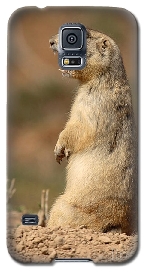 Prairie Dog Galaxy S5 Case featuring the photograph White-tailed Prairie Dog Giving A Fierce Bark by Max Allen