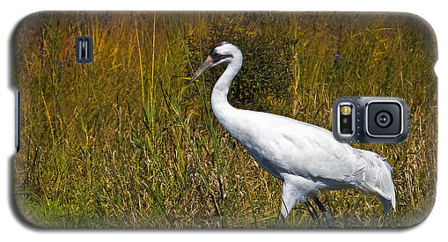 whooping Crane Galaxy S5 Case featuring the photograph Whooping Crane by Al Mueller