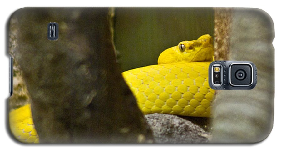 Yellow Galaxy S5 Case featuring the photograph Wicked Snake by Douglas Barnett