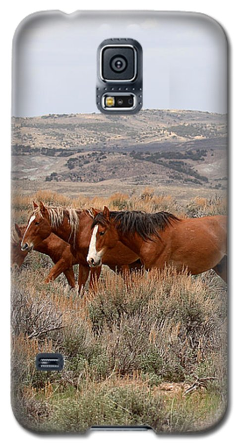 Horse Galaxy S5 Case featuring the photograph Wild Horse Trio by Max Allen