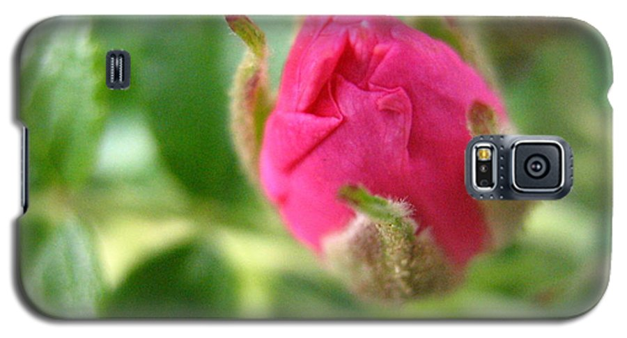 Rose Galaxy S5 Case featuring the photograph Wild Rose Bud by Melissa Parks