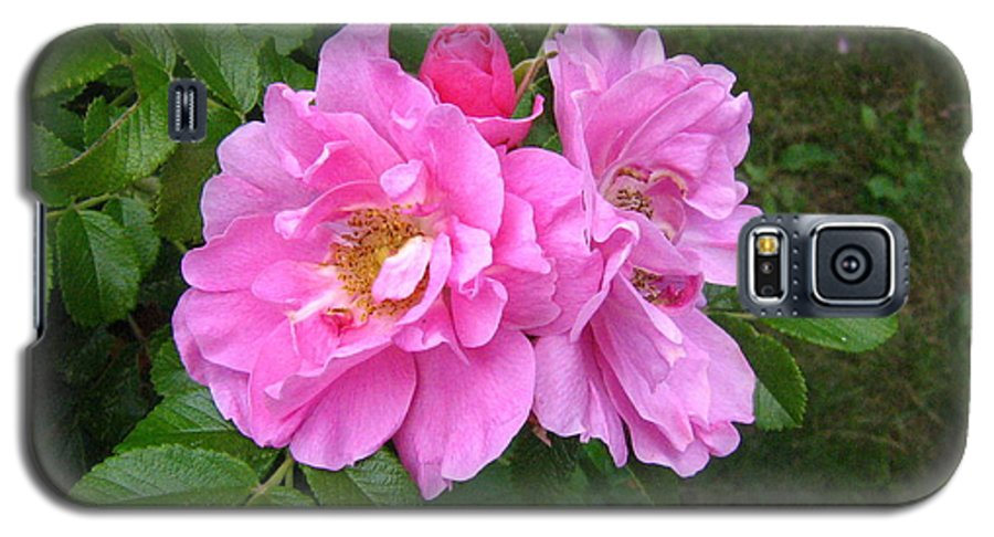 Rose Galaxy S5 Case featuring the photograph Wild Roses by Melissa Parks