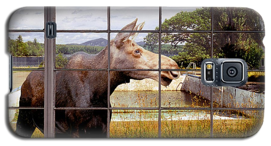 Moose Galaxy S5 Case featuring the photograph Window - Moosehead Lake by Peter J Sucy