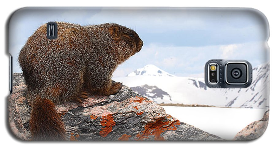 Marmot Galaxy S5 Case featuring the photograph Yellow-bellied Marmot Enjoying The Mountain View by Max Allen