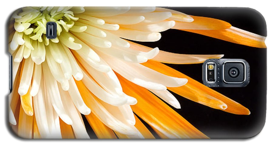 Flower Galaxy S5 Case featuring the photograph Yellow Flower On Black by Al Mueller