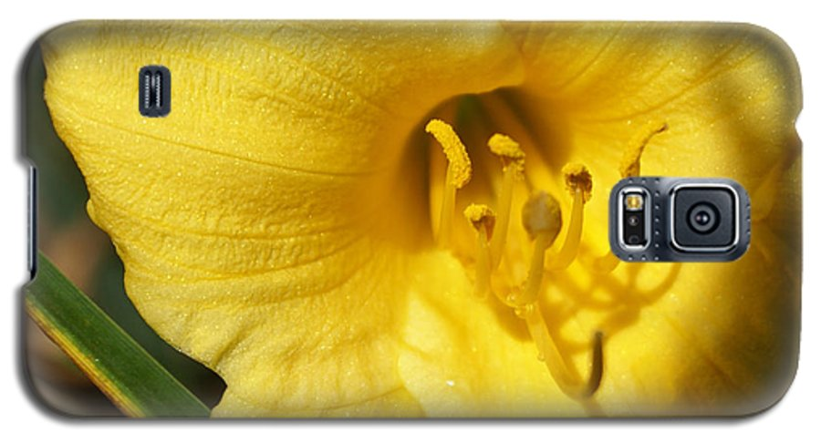 Yellow Galaxy S5 Case featuring the painting Yellow Pistols by Debbie May