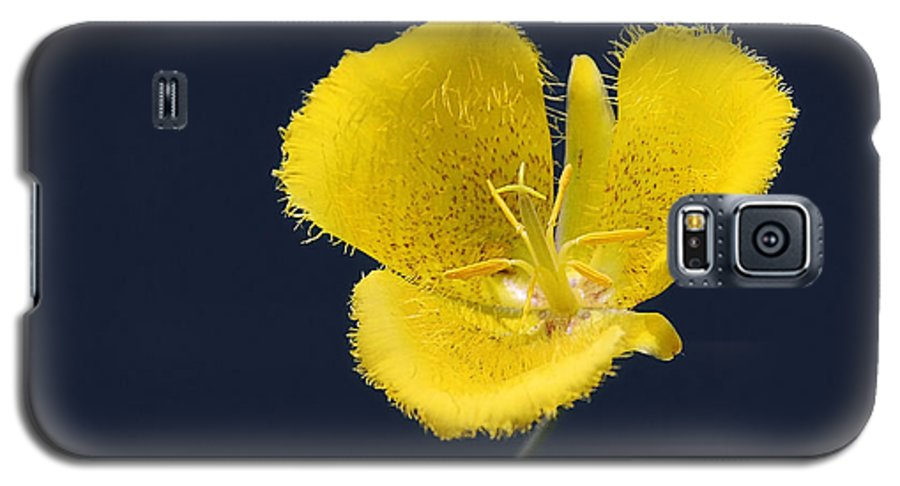 Flower Galaxy S5 Case featuring the photograph Yellow Star Tulip - Calochortus Monophyllus by Christine Till