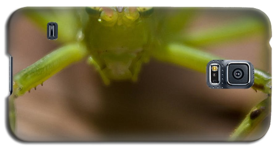 Katydid Galaxy S5 Case featuring the photograph You Said What by Douglas Barnett