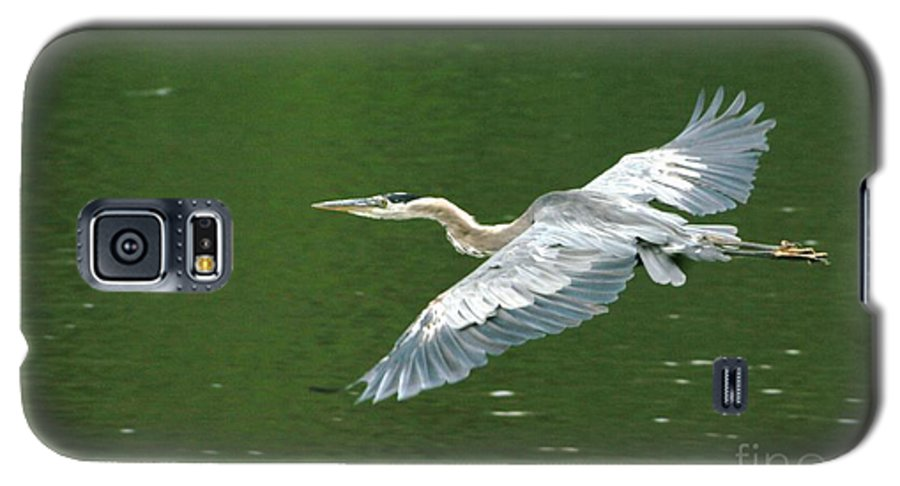 Landscape Nature Wildlife Bird Crane Heron Green Flight Ohio Water Galaxy S5 Case featuring the photograph Young Great Blue Heron Taking Flight by Dawn Downour