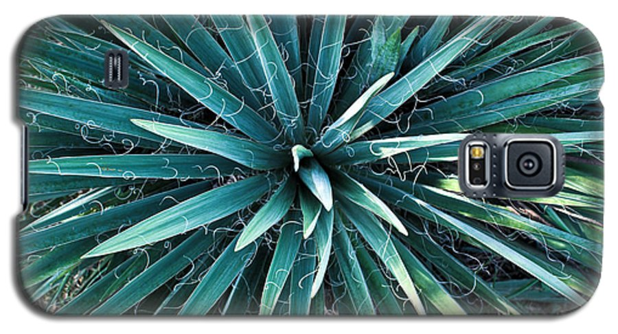 Yucca Galaxy S5 Case featuring the photograph Yucca Plant Detail by Douglas Barnett
