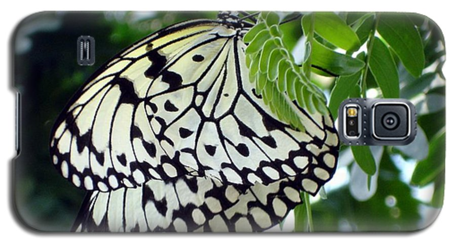 Butterfly Galaxy S5 Case featuring the photograph Zebra In Disguise by Shelley Jones