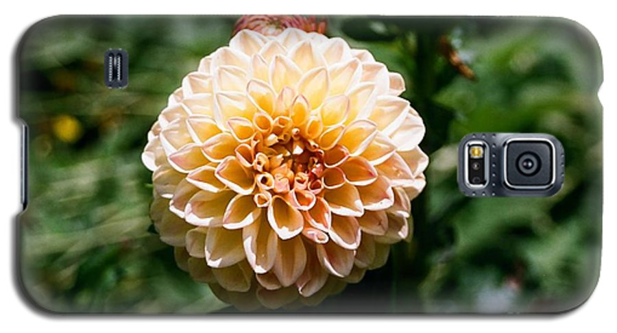 Zinnia Galaxy S5 Case featuring the photograph Zinnia by Dean Triolo