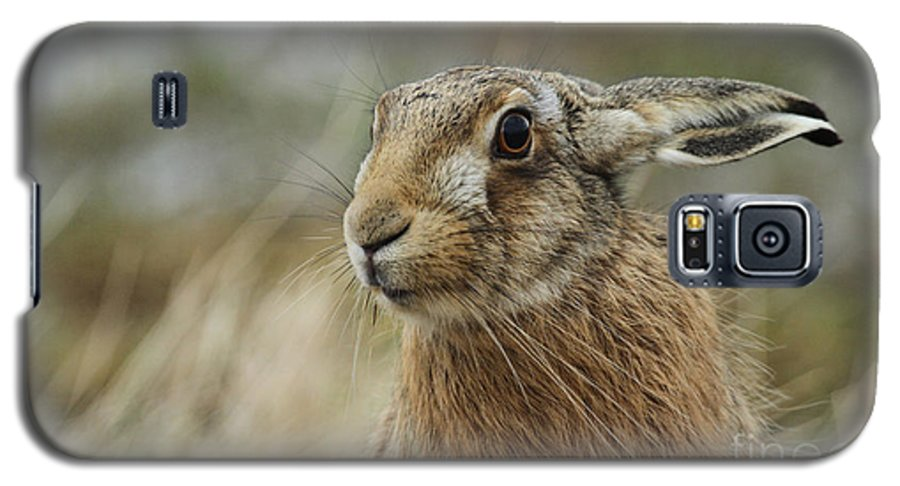 Fur Galaxy S5 Case featuring the photograph A Stunning Brown Hare Lepus Europaeus by Sandra Standbridge