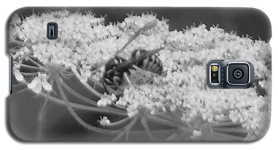 Hornet Galaxy S5 Case featuring the photograph Hornet Queen Anne's Lace by Rockin Docks