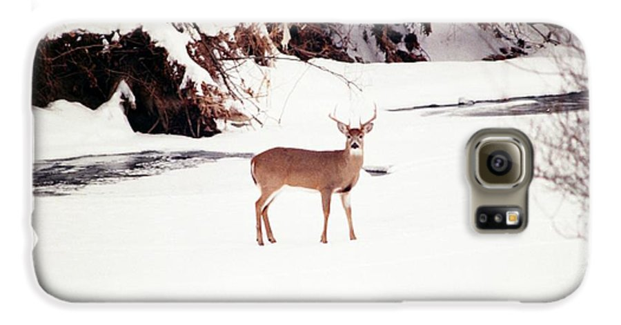 Whitetail Deer Galaxy S6 Case featuring the photograph 080706-89 by Mike Davis