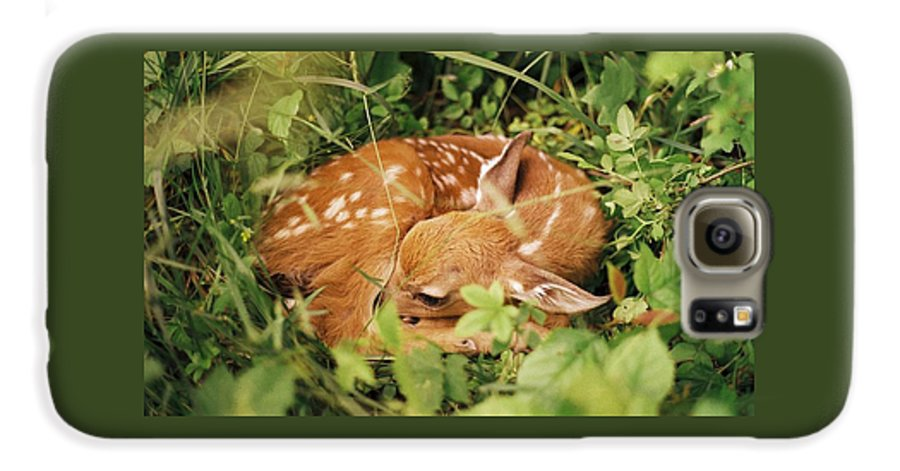 Deer Galaxy S6 Case featuring the photograph 080806-17 by Mike Davis