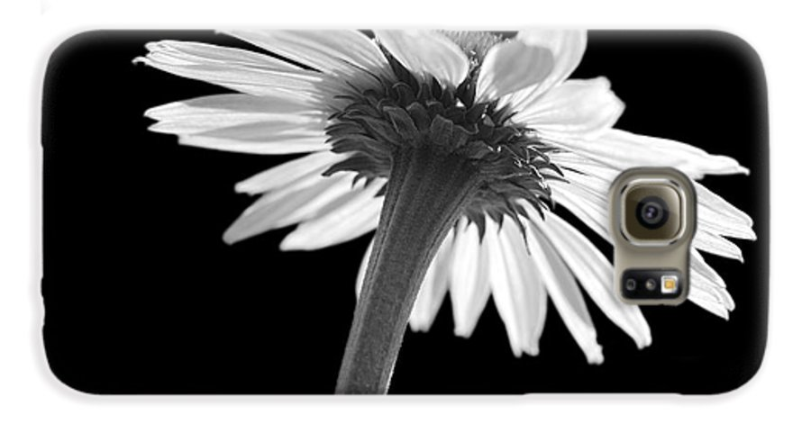 Echinacea Galaxy S6 Case featuring the photograph Coneflower by Tony Cordoza