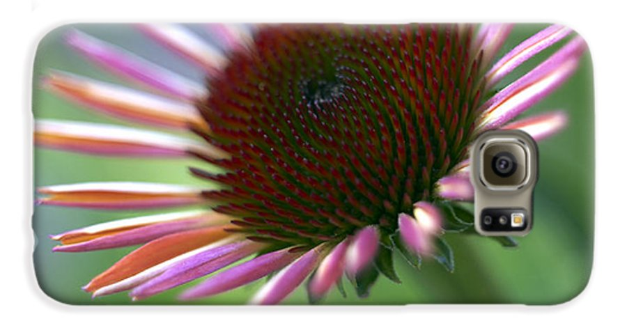 Genus Echinacea Galaxy S6 Case featuring the photograph Coneflower by Tony Cordoza