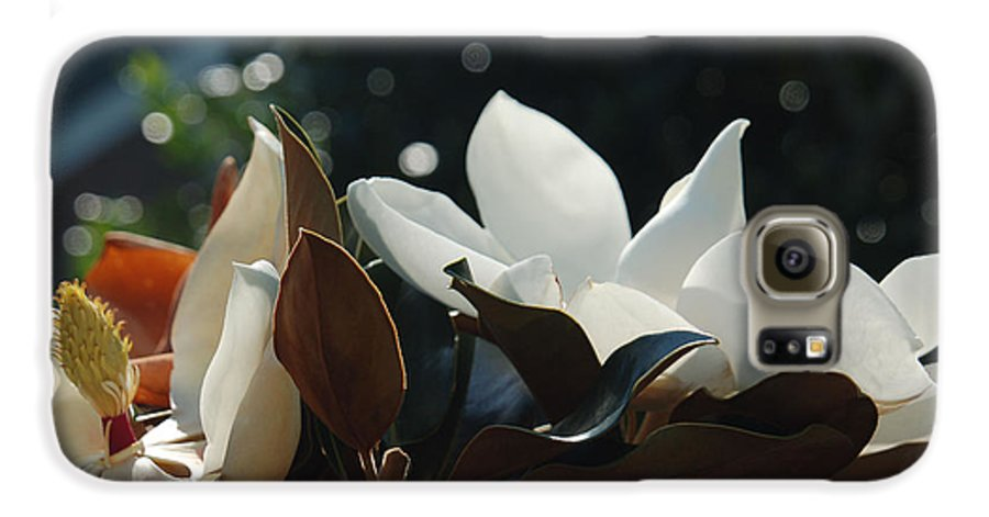 Magnolia Galaxy S6 Case featuring the photograph A Sea Of Magnolias by Suzanne Gaff