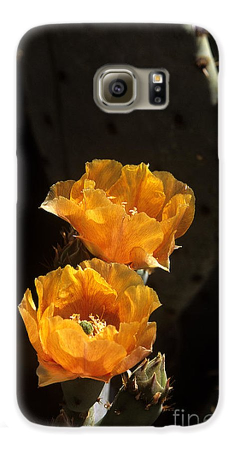 Cactus Galaxy S6 Case featuring the photograph Apricot Blossoms by Kathy McClure