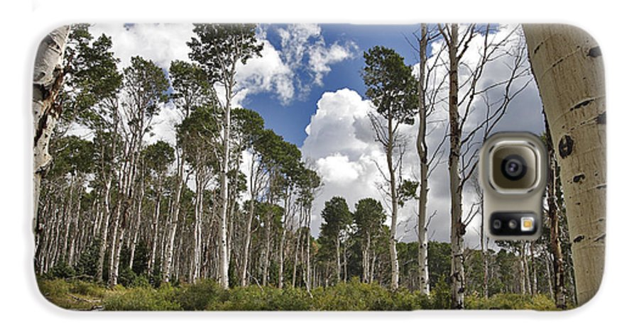 3scape Photos Galaxy S6 Case featuring the photograph Aspen Grove by Adam Romanowicz