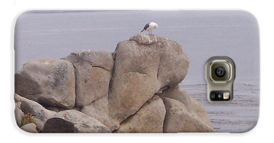 Bird Galaxy S6 Case featuring the photograph Bird On A Rock by Pharris Art