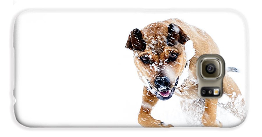 Boxweiler Galaxy S6 Case featuring the photograph Bounding In Snow by Thomas R Fletcher