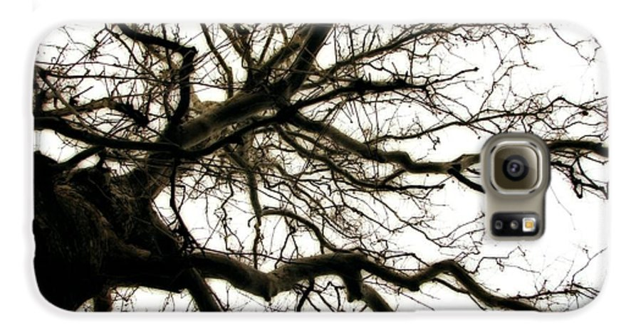 Branches Galaxy S6 Case featuring the photograph Branches by Michelle Calkins