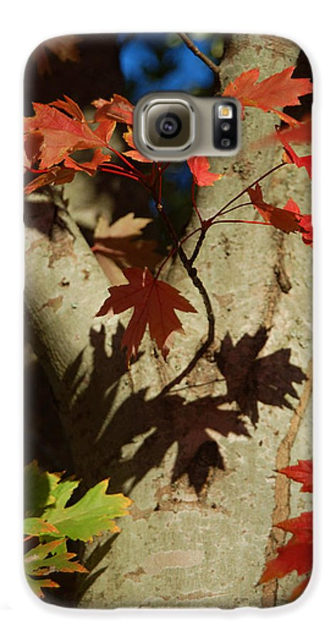 Autumn Galaxy S6 Case featuring the photograph Carolina Autumn by Suzanne Gaff