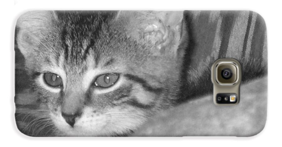 Kitten Galaxy S6 Case featuring the photograph Comfy Kitten by Pharris Art