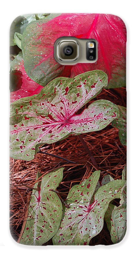 Caladium Galaxy S6 Case featuring the photograph Courtyard Caladium by Suzanne Gaff
