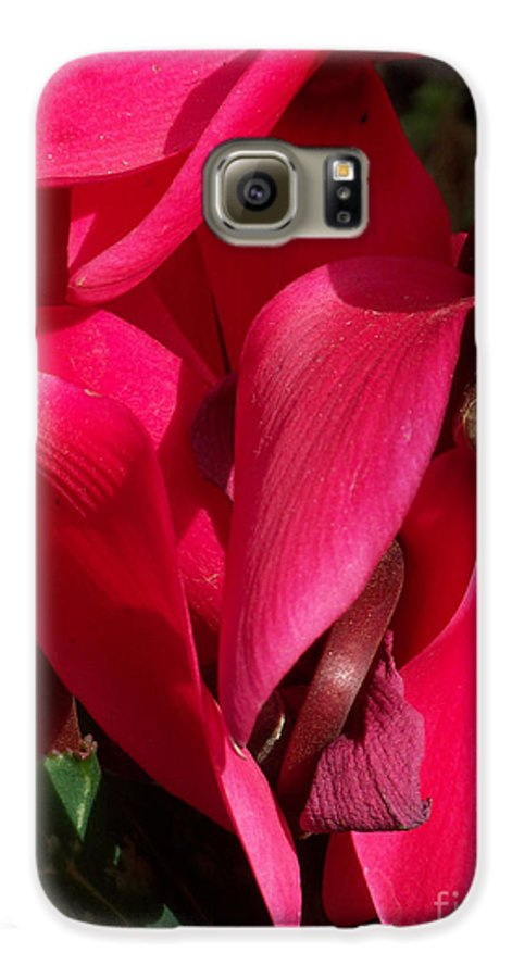 Flowers Galaxy S6 Case featuring the photograph Cyclamen by Kathy McClure