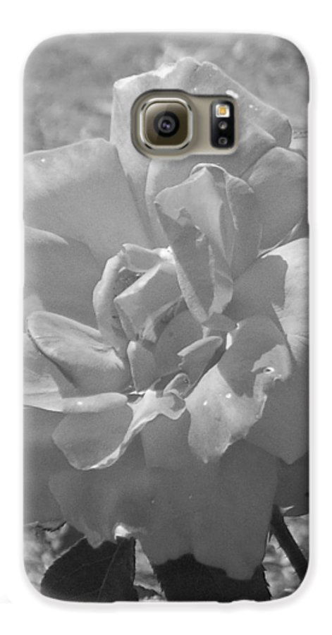 Rose Galaxy S6 Case featuring the photograph Dew Rose by Pharris Art