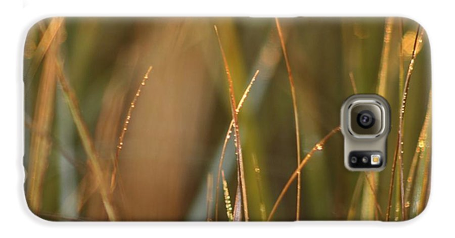 Dew Galaxy S6 Case featuring the photograph Dewy Grasses by Nadine Rippelmeyer
