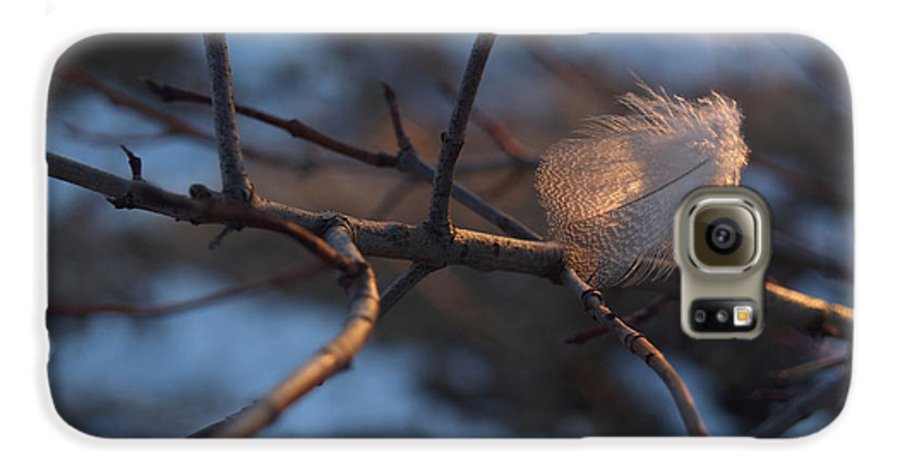 Branch Galaxy S6 Case featuring the photograph Downy Feather Backlit On Wintry Branch At Twilight by Anna Lisa Yoder