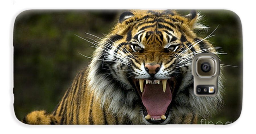 Tiger Galaxy S6 Case featuring the photograph Eyes Of The Tiger by Mike Dawson
