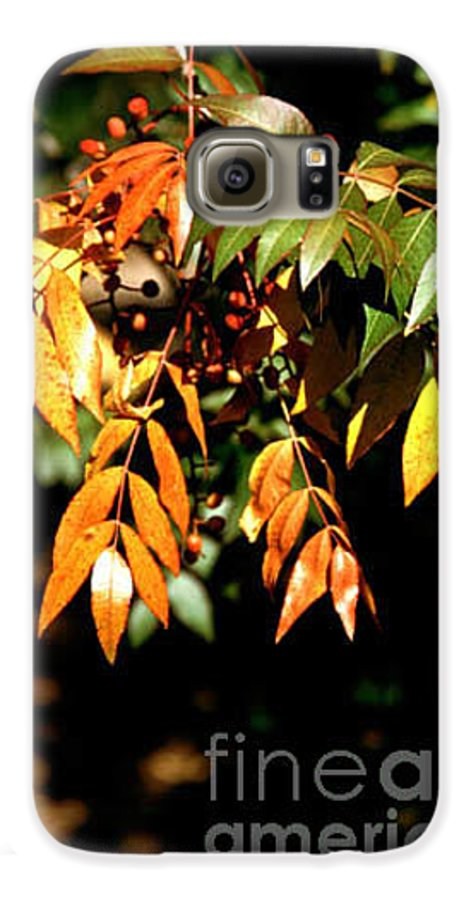 Fall Color Galaxy S6 Case featuring the photograph Fall Leaves by Kathy McClure