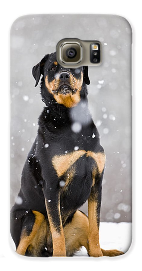 Light Galaxy S6 Case featuring the photograph Female Rottweiler Sitting On Top Of A by Jim Craigmyle