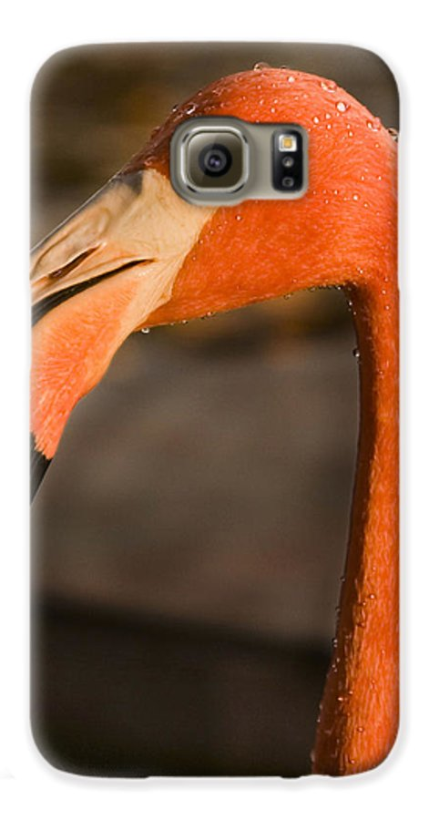 3scape Galaxy S6 Case featuring the photograph Flamingo by Adam Romanowicz