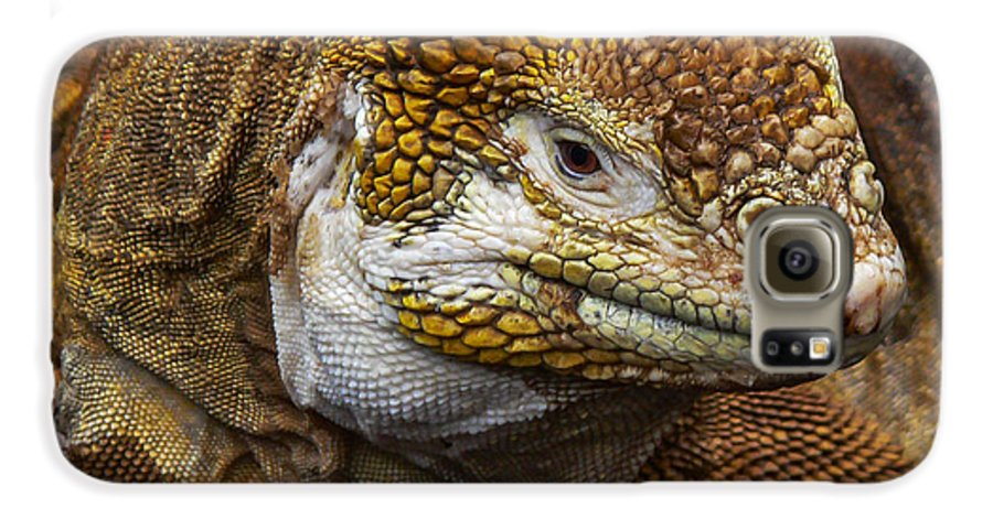 Galapagos Galaxy S6 Case featuring the photograph Galapagos Land Iguana by Allen Sheffield