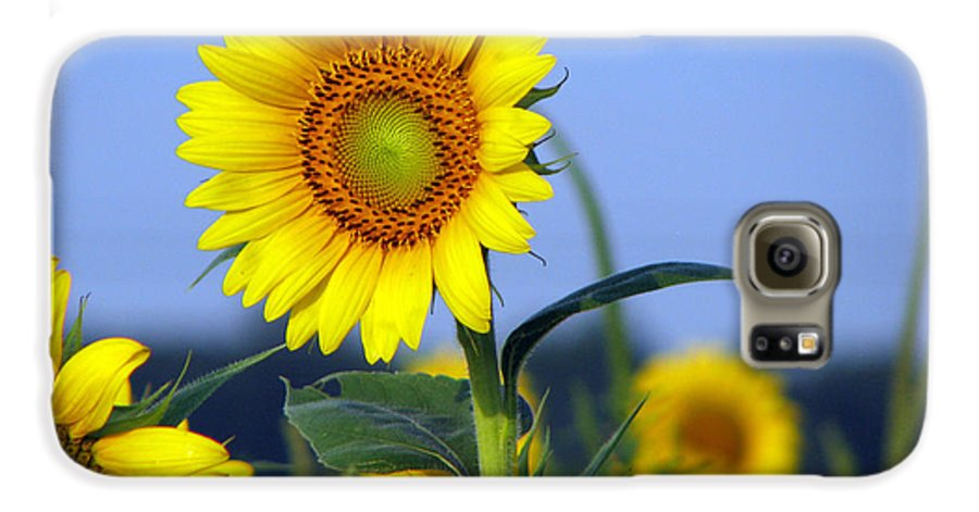 Sunflower Galaxy S6 Case featuring the photograph Getting To The Sun by Amanda Barcon