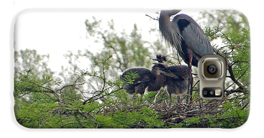 Great Blue Heron Galaxy S6 Case featuring the photograph Great Blue Heron With Fledglings by Suzanne Gaff