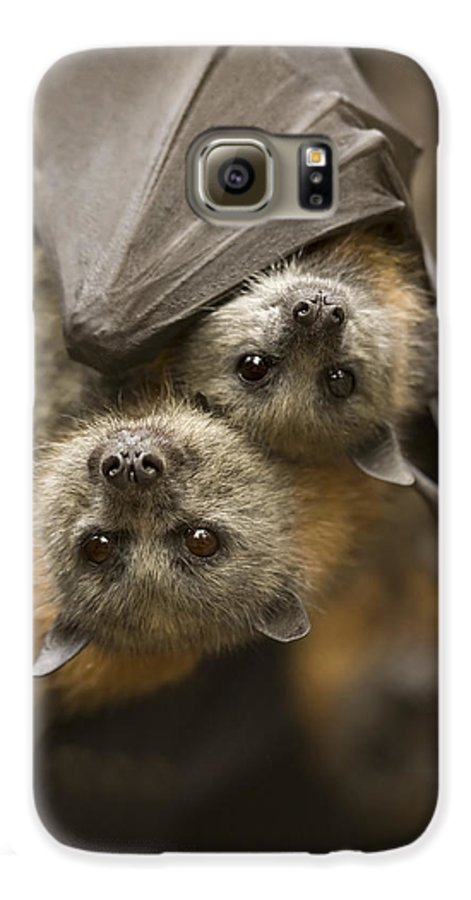 Bats Galaxy S6 Case featuring the photograph Hang In There by Mike Dawson