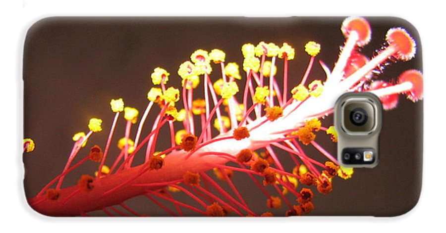 Hibiscus Galaxy S6 Case featuring the photograph Hibiscus by Mary Ellen Mueller Legault